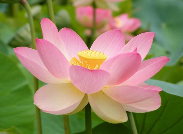 Rekonstruálták a világ első virágát