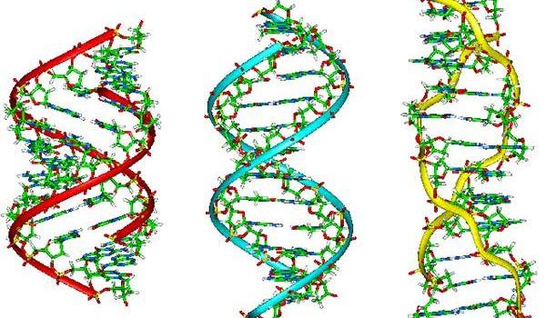 Először iktattak ki betegséget okozó DNS-t humán embrióból